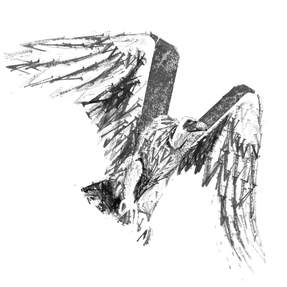 Vulture illustration, letter V stamps