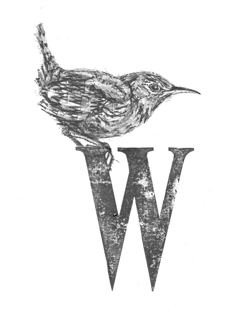 W for Wren scan 600 lightened small