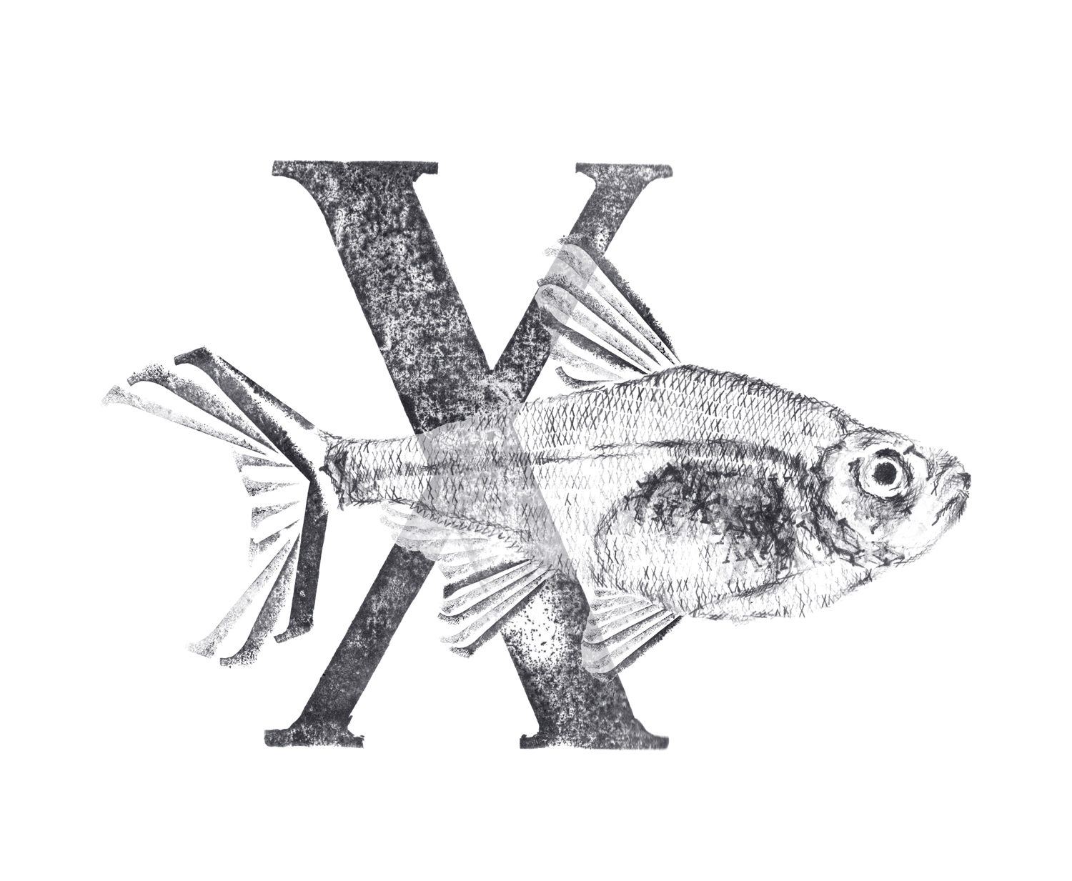 Xray fish with X small