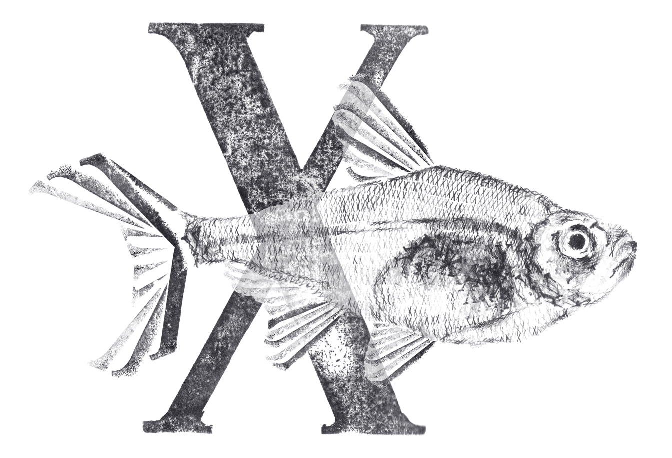 Xray fish with X web